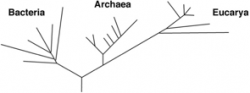 The tree of life, based on rRNA sequence analysis